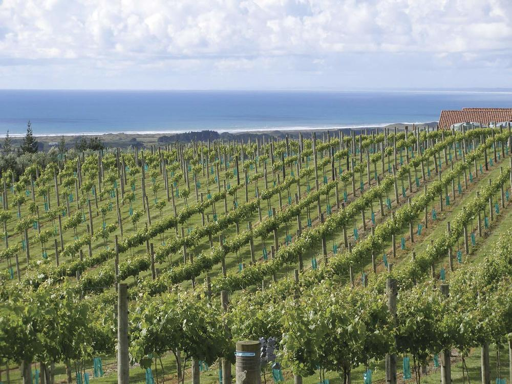 Waitapu Estate, the westernmost in the Northland wine region.
