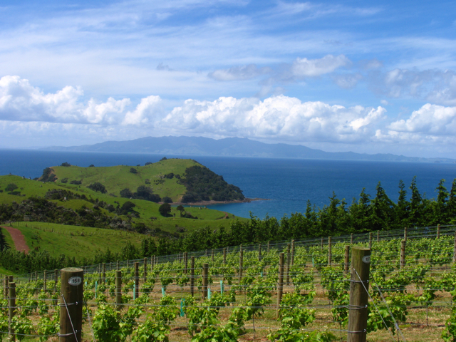 Man O' War Vineyard on Waiheke Island