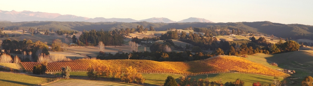 Neudorf's Hill Block Vineyard, Nelson wine region.