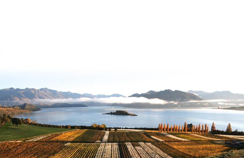 Rippon Vineyard at Lake Wanaka, Central Otago.