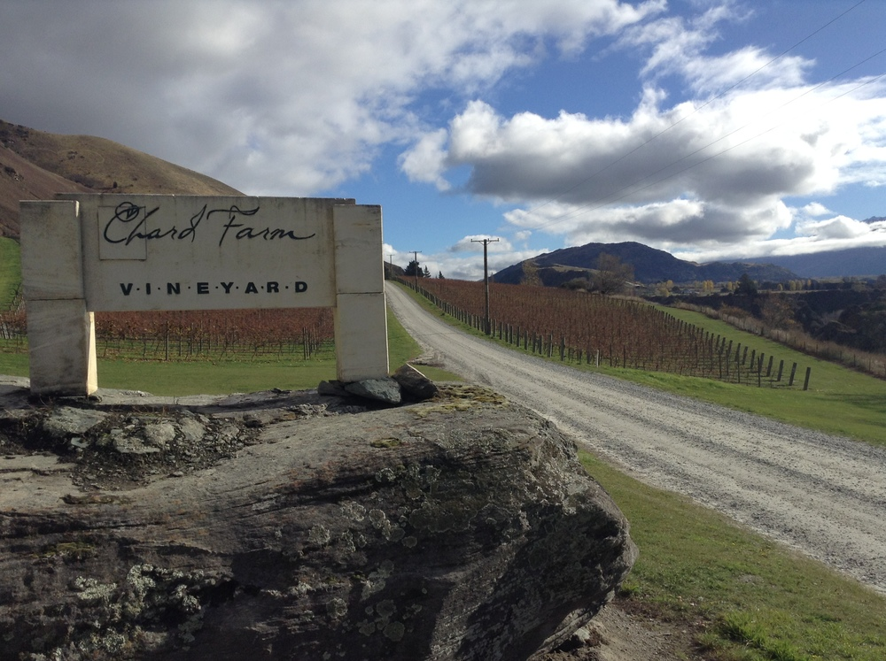 The entrance driveway to Chard Farm, framed by it's home vineyard