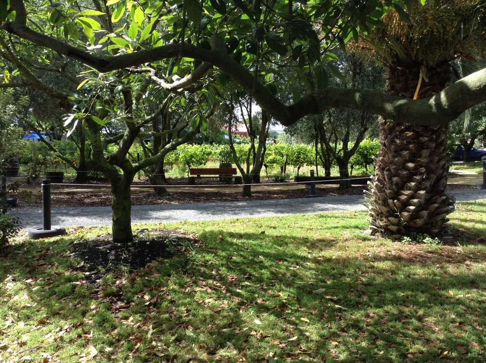 Vineyard is nestled just across from the sea, amongst Palm trees and a large olive grove at Clearview Estate.