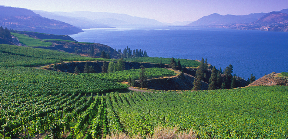 Mission Hill Vineyards, Okanagan