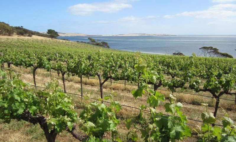 Coastal vineyard on Kangaroo Island.