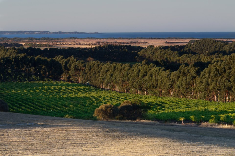 Cape Jaffa Wines , Mount Benson