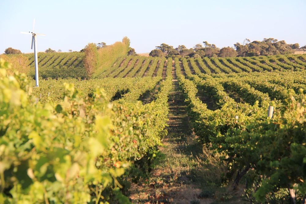 Waterhouse Range Vineyard,  Governor Robe Estate , Robe