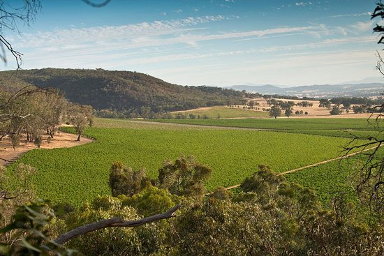 The Baileys of Glenrowan vineyards