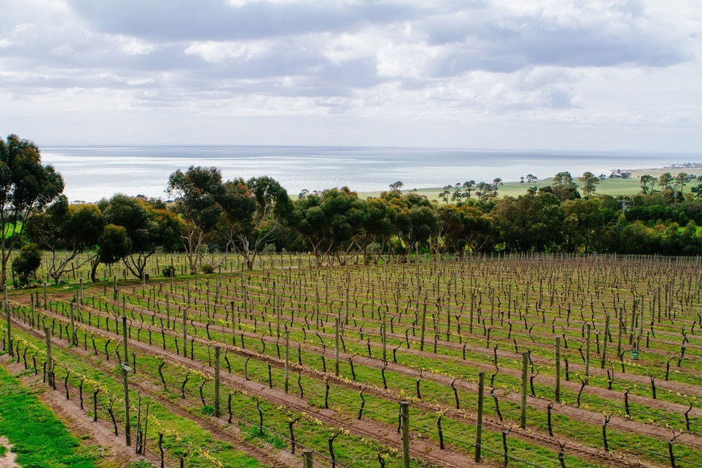Jack Rabbit Vineyard looking out into Port Philip on a cloudy day, Bellarine Peninsula, Geelong