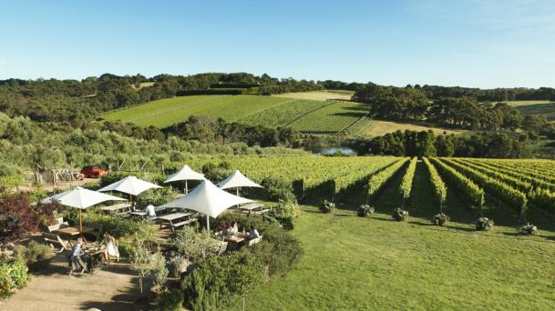 Montalto Vineyard and Olive Grove - Mornington Peninsula