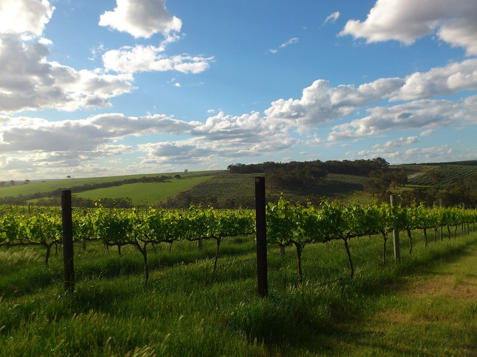 Plantagent Wines  - Mount Barker