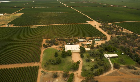 Large production vineyards - Swan Hill