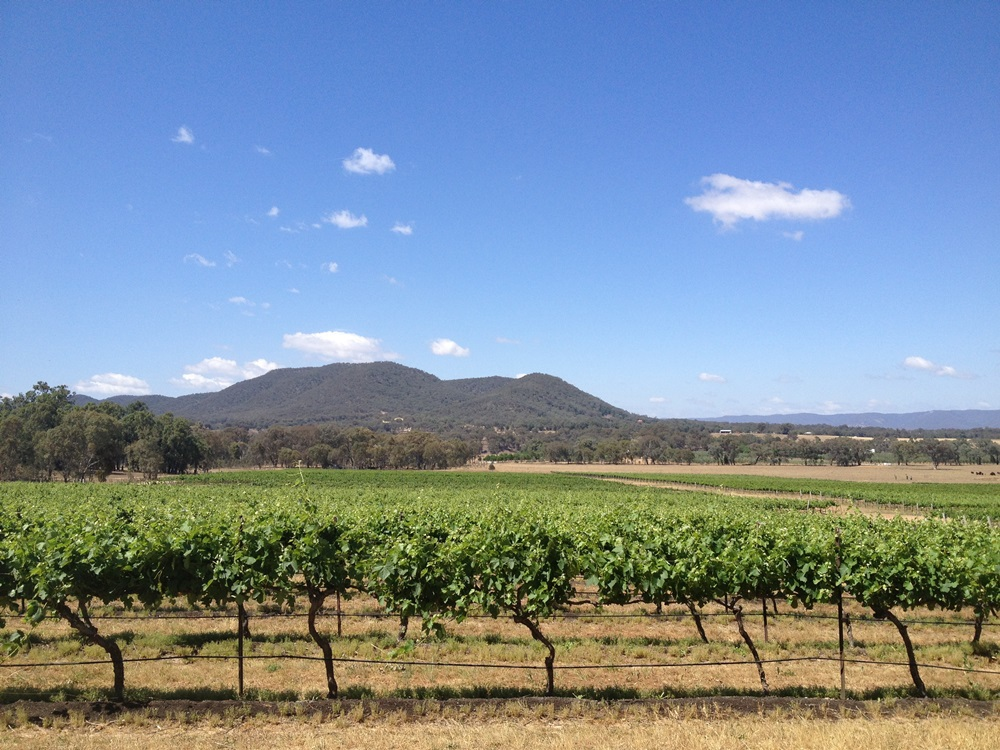 Vineyards in Summer - Mudgee