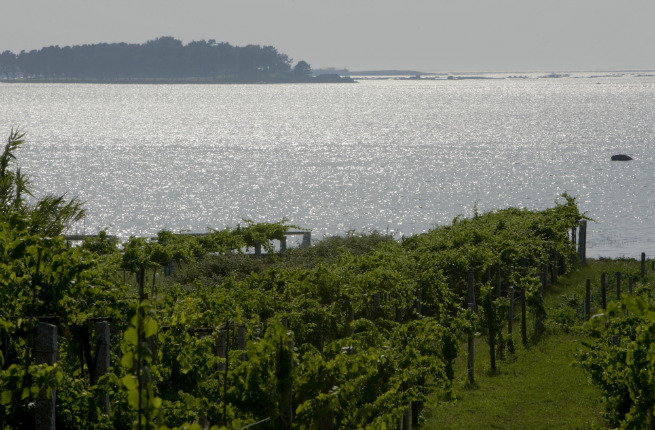 Seaside vines in Rias Baixas