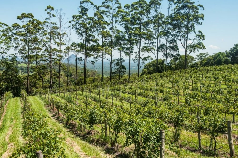 Maleny Mountain Wines , Sunshine Coast