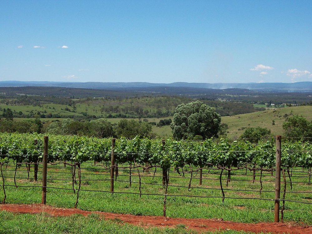 Vineyard in South Burnett (Captain's Paddock- Now Closed)