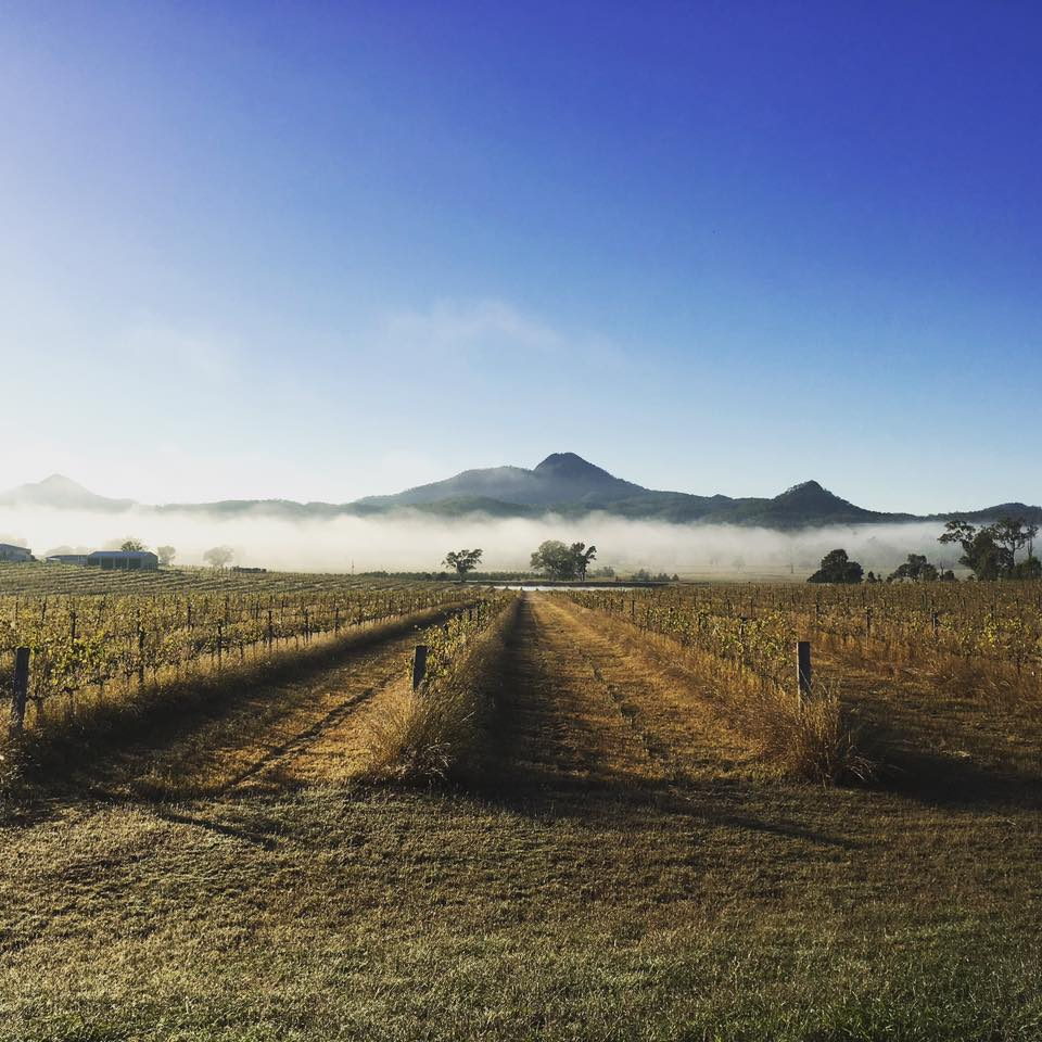 Flinders Peak Winery, Scenic Rim