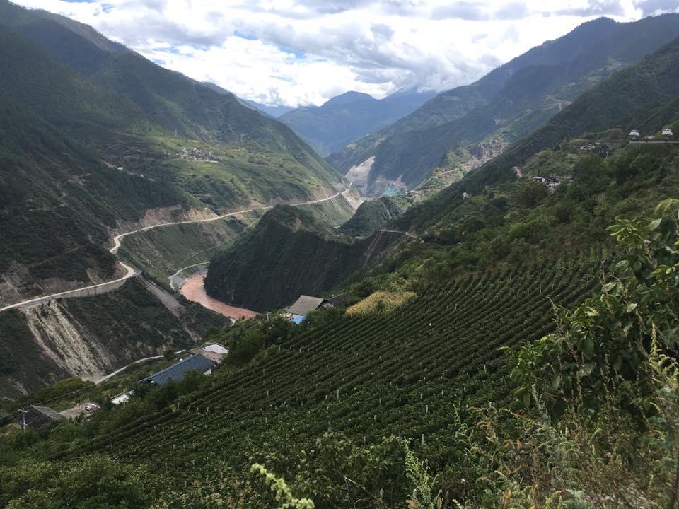 Xiaoling Estate, Yunnan
