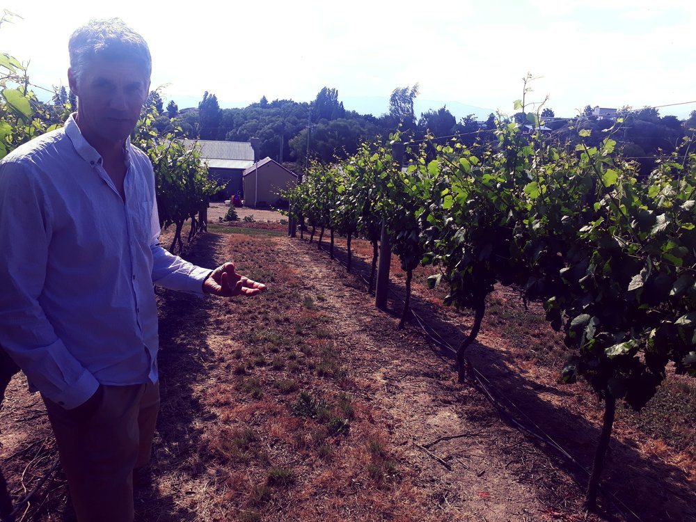 Dave Grant shows us through Shaky Bridge's vineyard