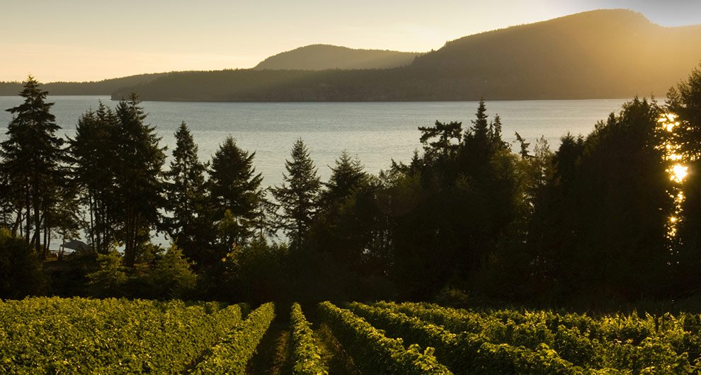 Pender Island Gulf Islands Vineyard.jpg