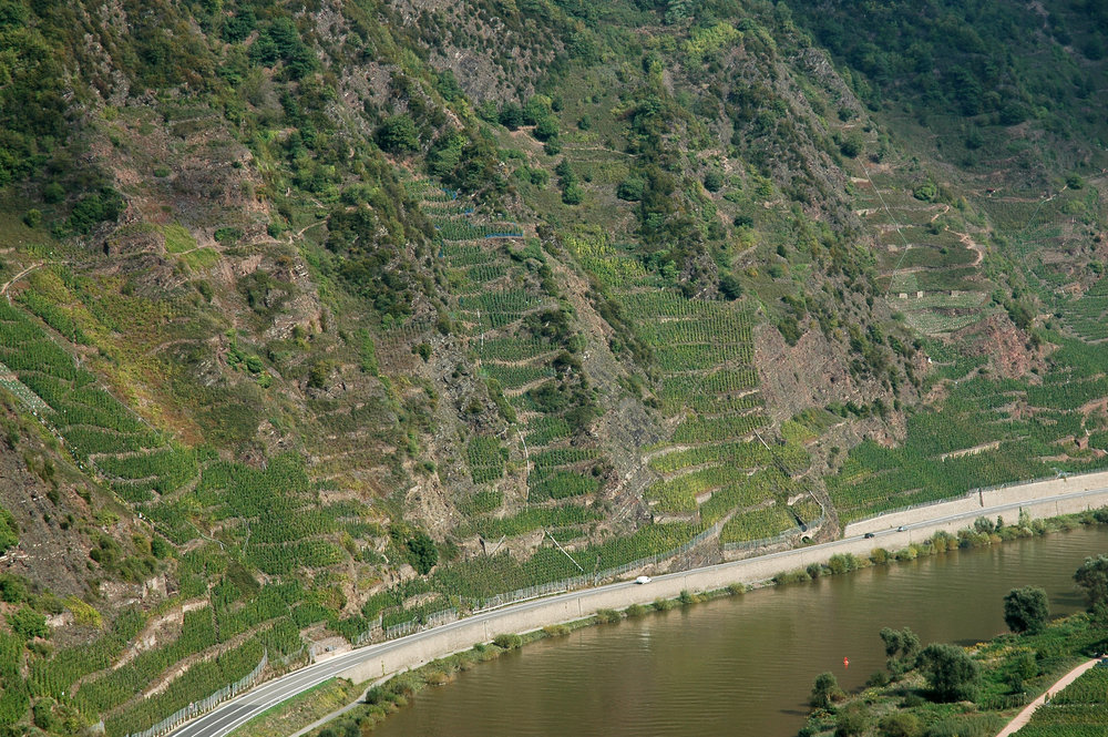 Bremmer Calmont vineyard, in the Mosel, Germany with it's vertigo-inducing Riesling plantings, amongst the steepest in the world.
