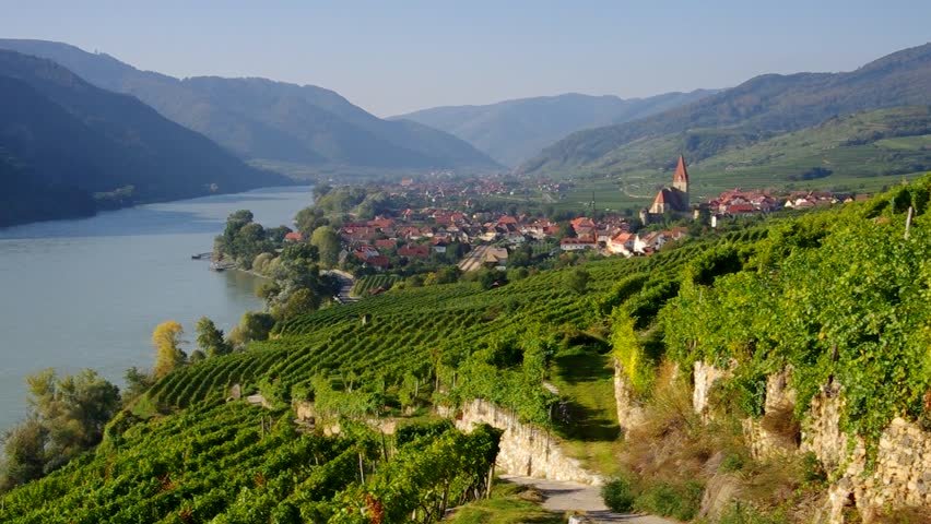 Riesling vineyards - Wachau, Austria