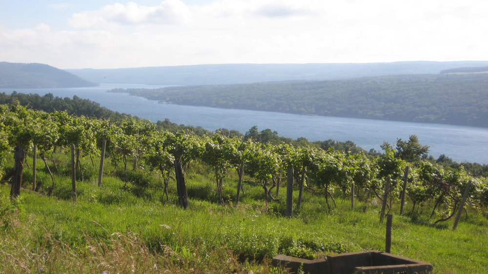 Vineyards alongside Keuka Lake, Finger Lakes, New York