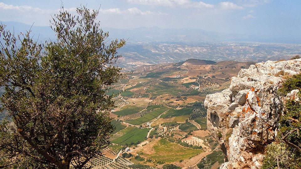 Vineyards and olives abound on the large Greek Island of Crete! Image:  Sinadinakis Winery