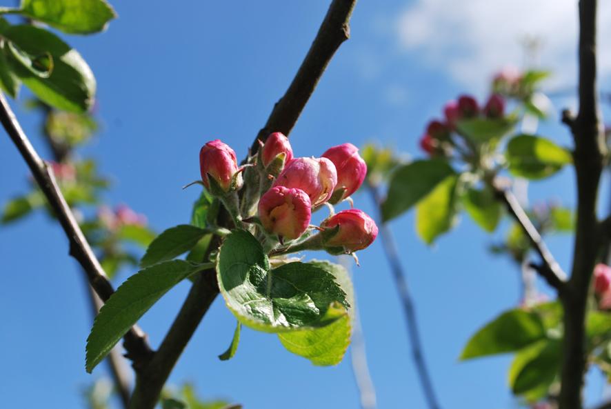 Blossom2.jpeg