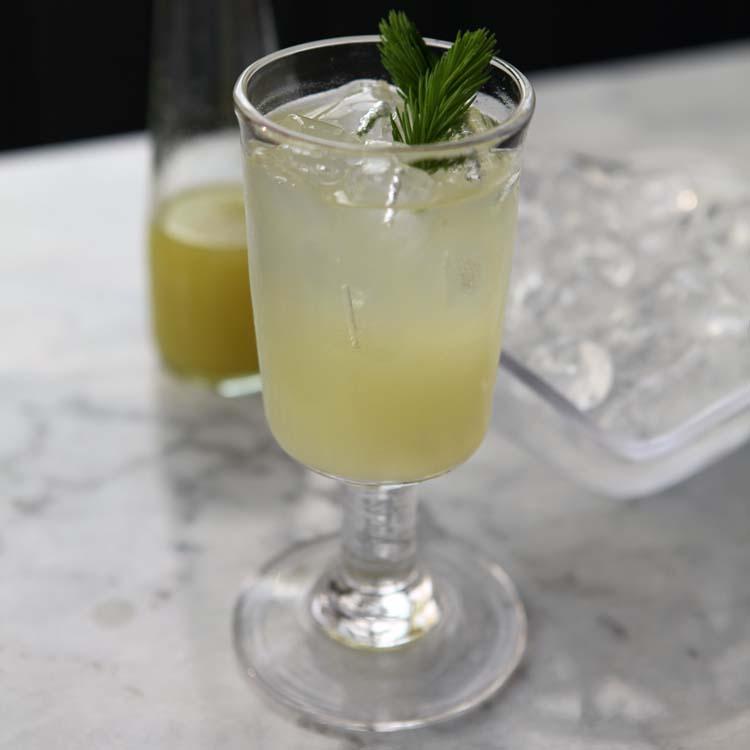 Spruce Tip Soda