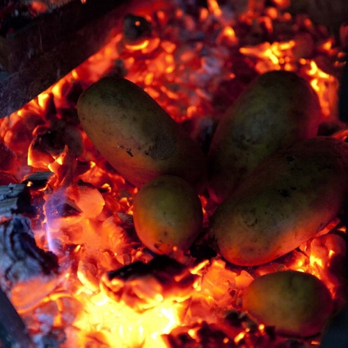 Potatoes Roasted in Hot Coals