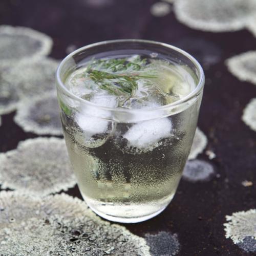 Vodka and Spruce Tip Soda