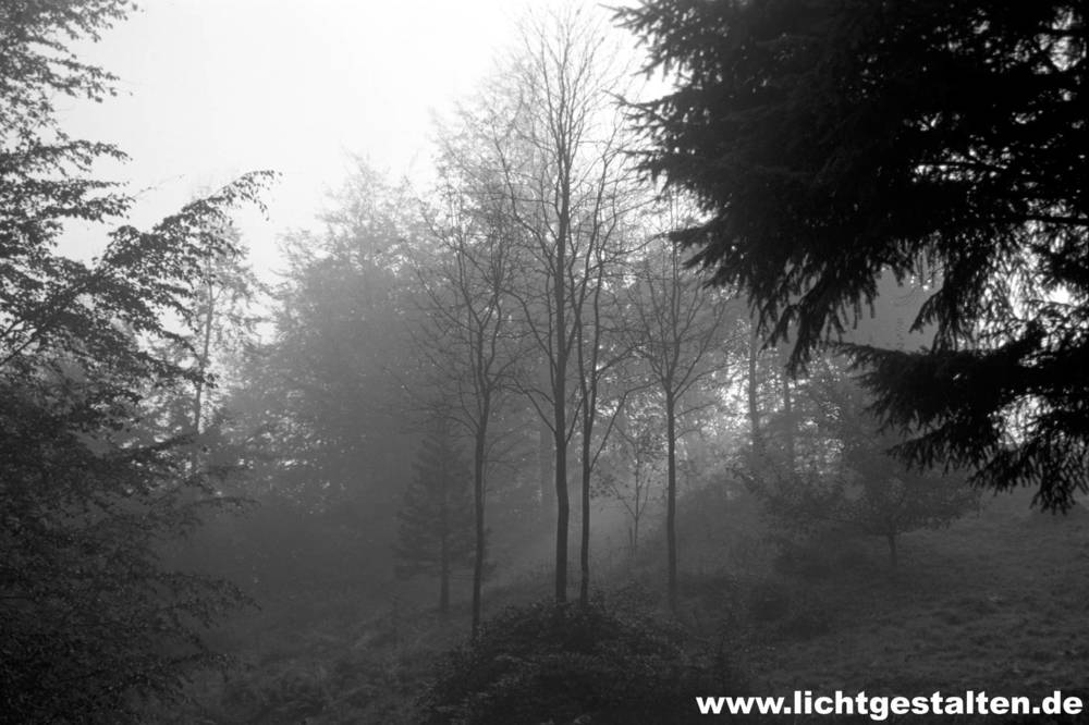 Forest_Germany_Fog_Tree_Sun.jpg