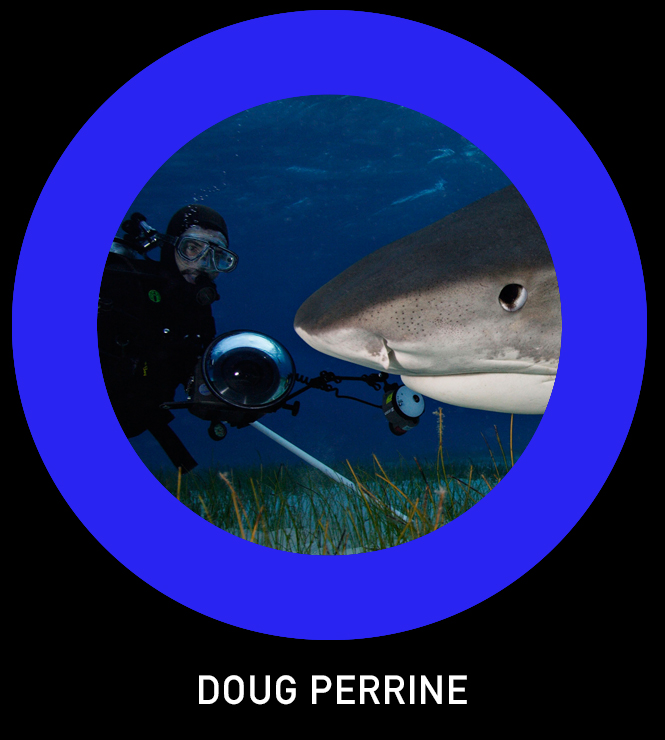 Doug Perrine TLO.jpg
