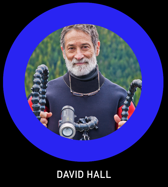 David Hall TLO.jpg