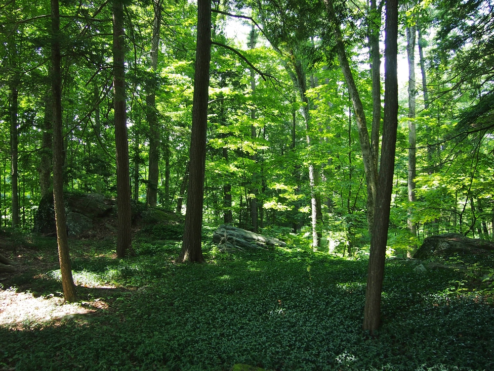 Photo of the forest...