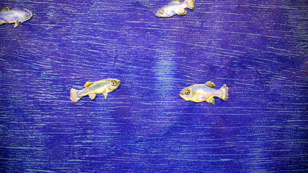 Devil's Hole Pupfish (detail)