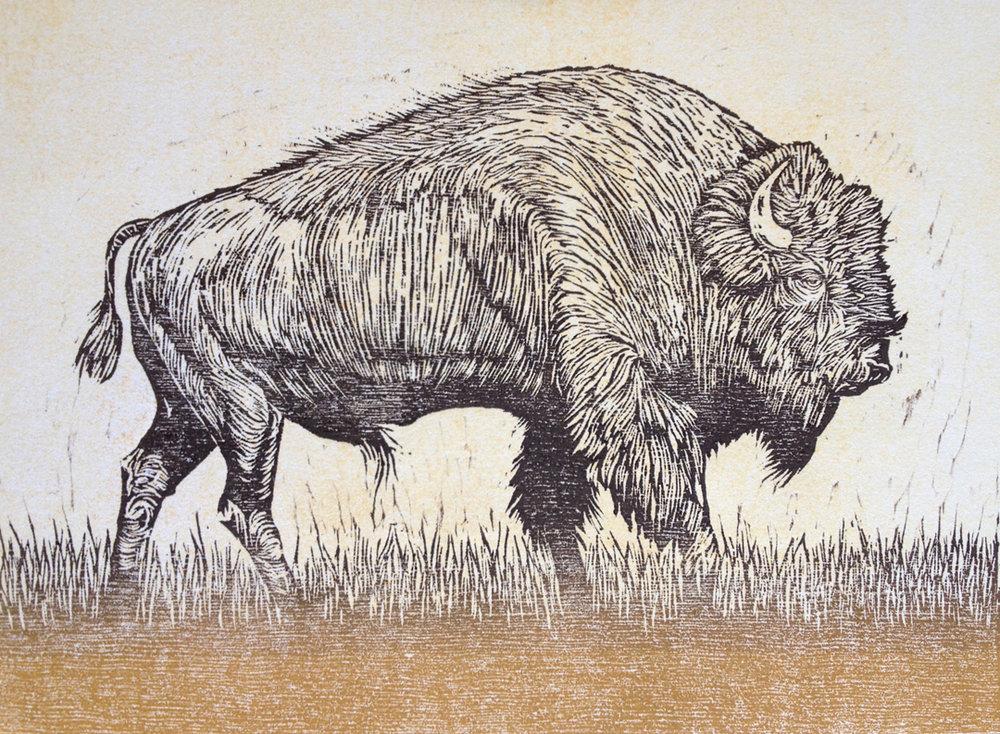 Untitled (Buffalo)