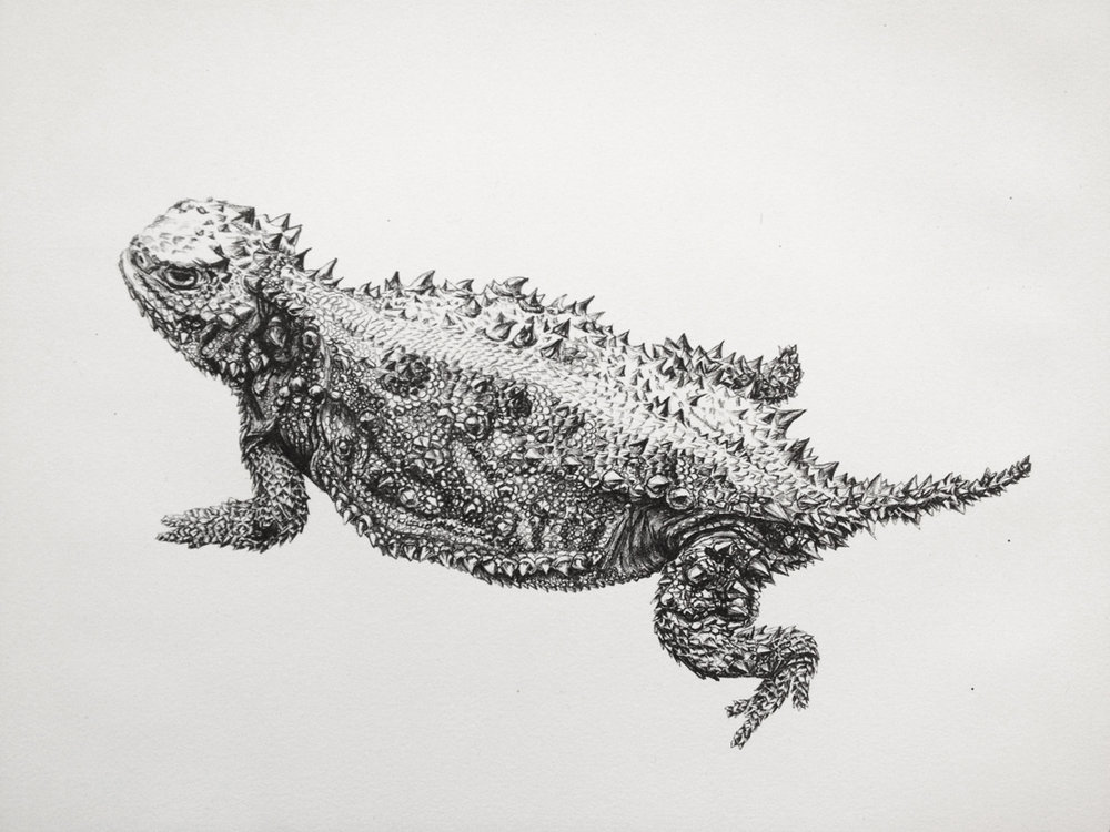 Untitled (Horny Toad)