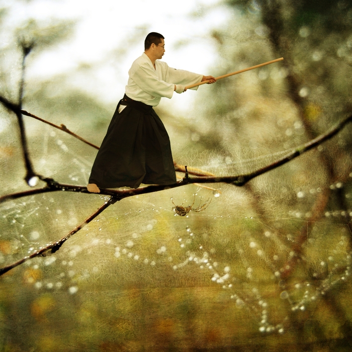 Aikido on a Twig