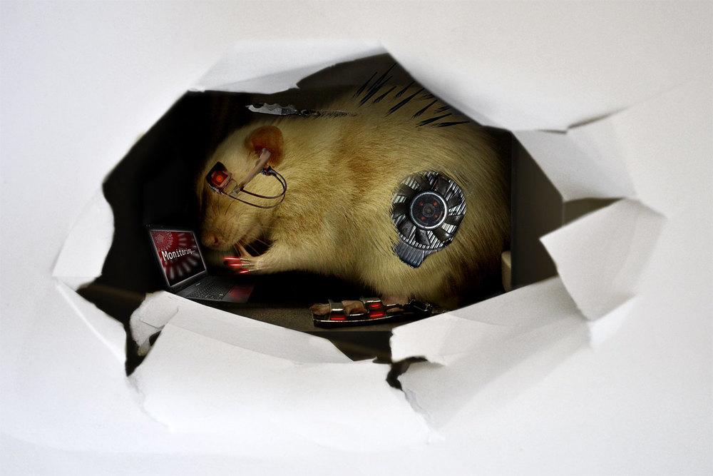 Rat Spy