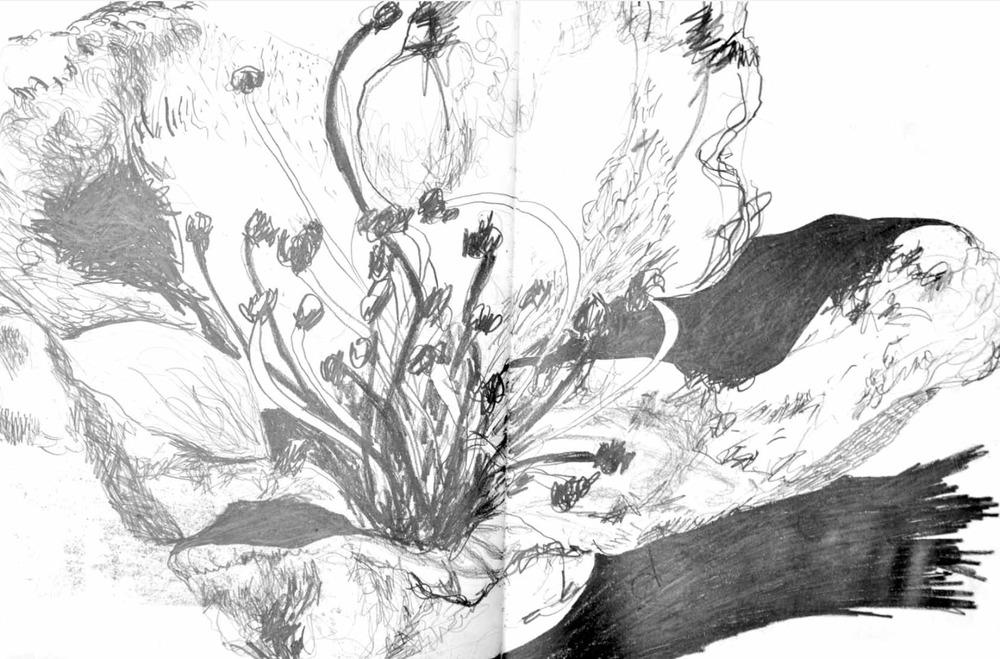 Stamen , 2009 graphite on paper,sketchbook 59,4 x 42 cm