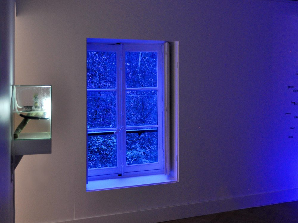 re - ,2015-16  neon, water, glass, wood 34 x 27 x 20 cm    Nuits Américaines , 2017-18  filters, site-specific installation dimensions variable  installation view,  Nuits Américaines , Maison de Chateaubriand, Châtenay-Malabry, 2017-2018