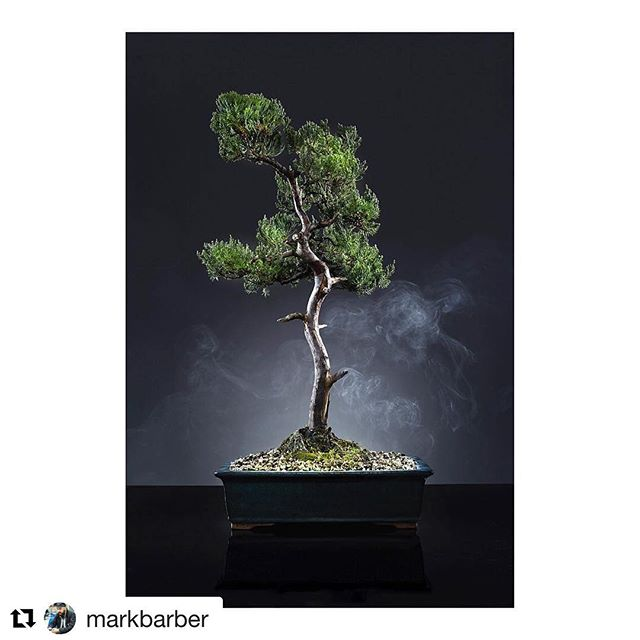 #Repost @markbarber 👏🏻👏🏻 ・・・ Playing around with a Japanese Juniper from @adrianbirdbonsai in studio over the weekend. . . . . #canon #profoto #bansai #bansaitree #japanesejuniper #studiophotography #studiolighting #stilllife #smokeandmirrors