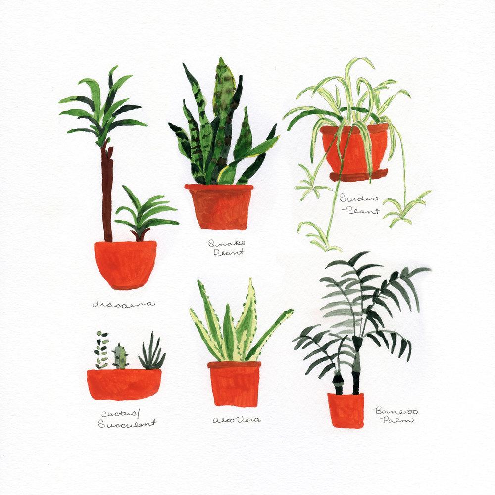 Houseplants_whitespace.jpg