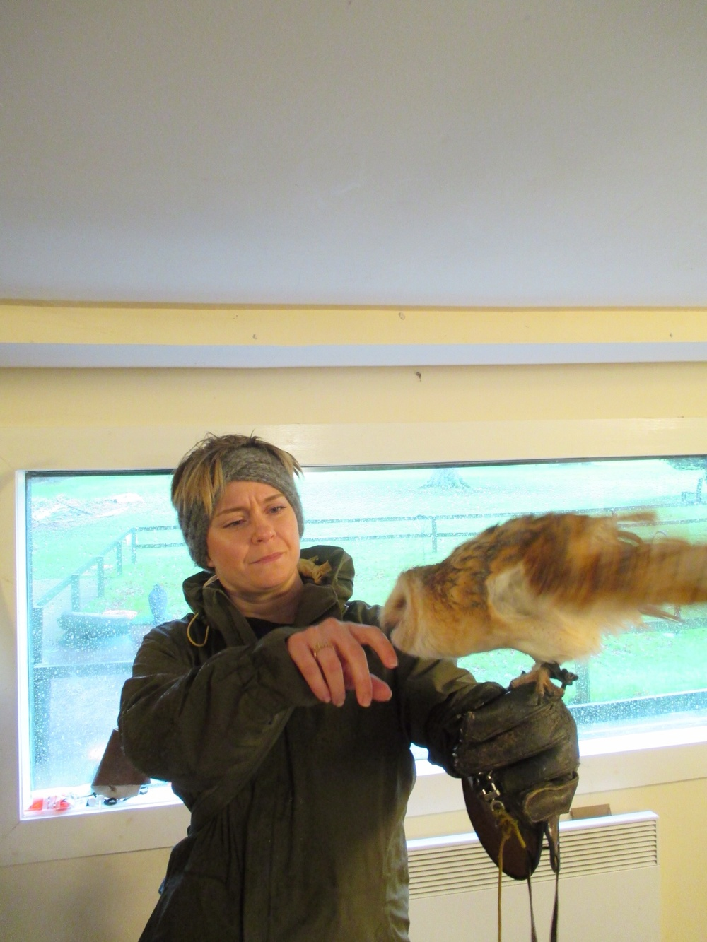 This barn owl gently nibbled away at my fingers, checking for something good to eat.