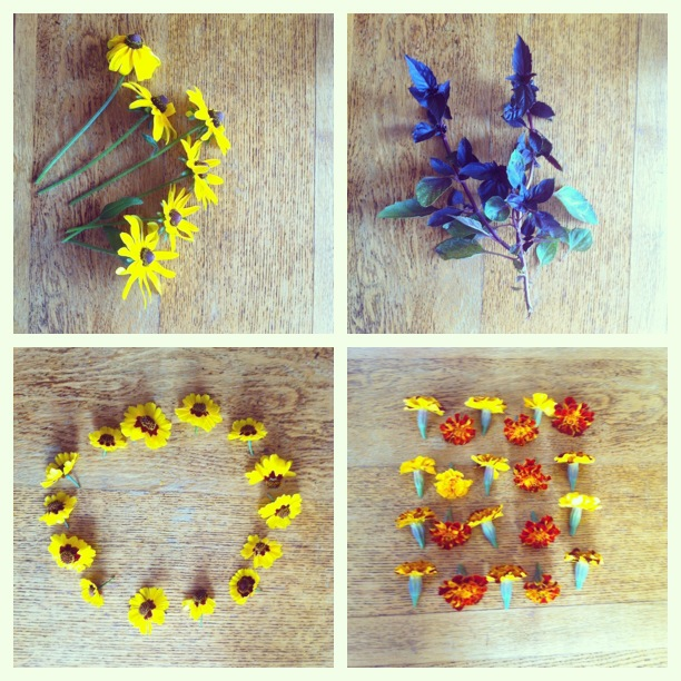 brooklyn dye garden harvest: black eyed susan, purple basil, coreopsis & marigold
