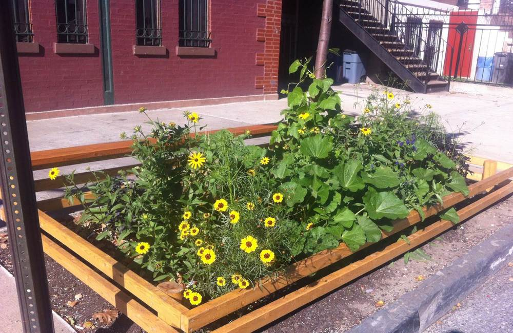 The bench-top Brooklyn Tree Guard Dye Planter, Summer 2013. Flowering coreopsis, black-eyed susan, hollyhock, alkanet, purple basil and more!