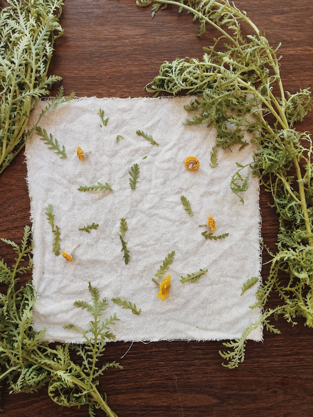 medicinal dyeing with chamomile
