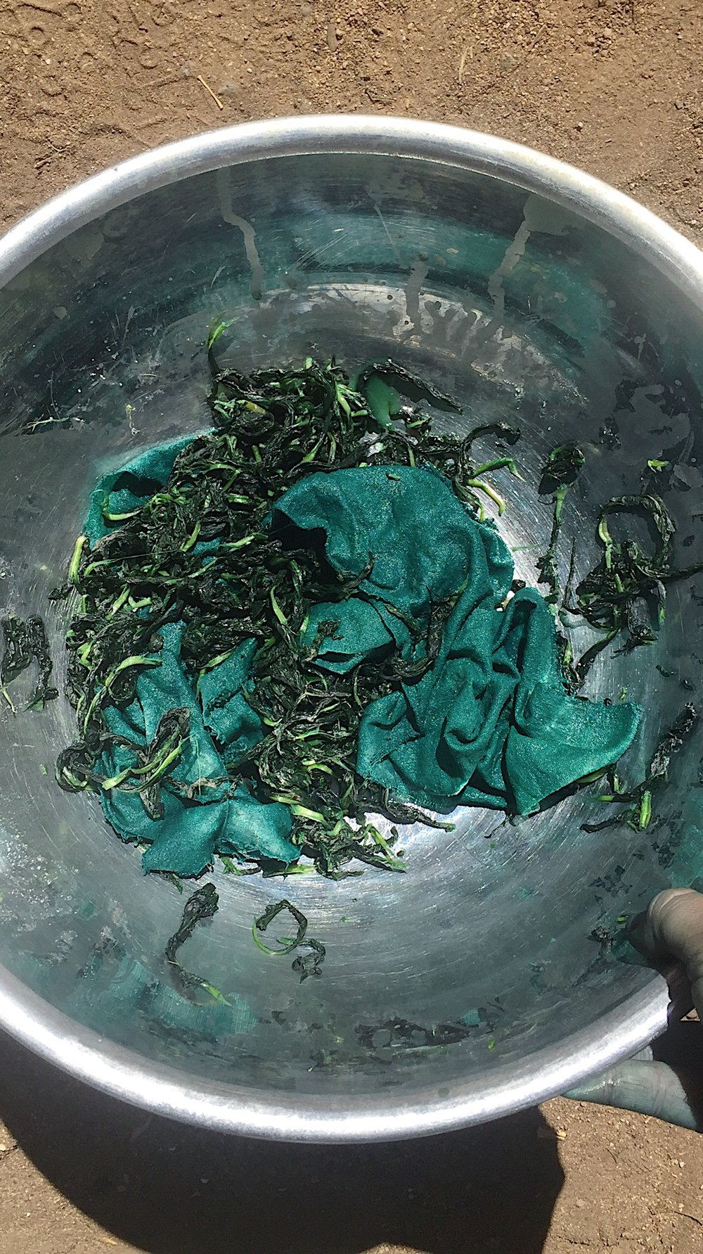 fresh leaf japanese indigo salt rub method in action