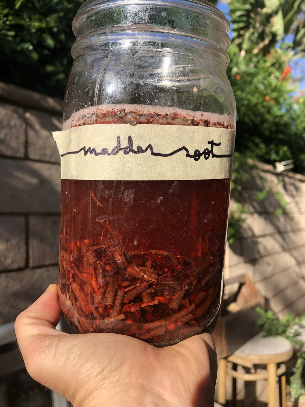 Madder root chopped and red dye is slowly being extracted